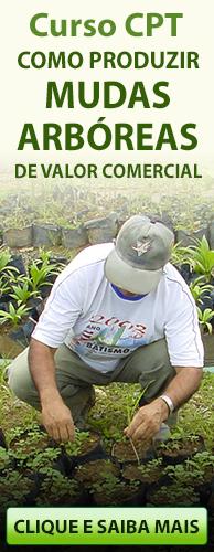 Curso CPT Como Produzir Mudas Arbóreas de Valor Comercial. Clique aqui e conheça!