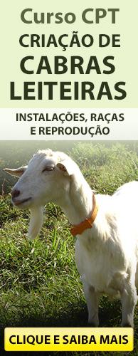 Curso CPT Criação de Cabras Leiteiras - Cria, Recria e Produção de Leite. Clique aqui e conheça!