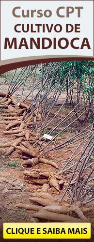 Curso CPT Cultivo de Mandioca. Clique aqui e conheça!