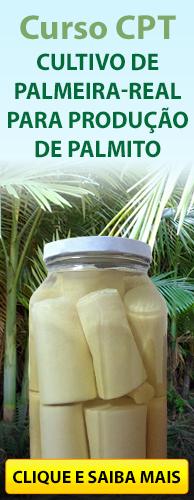 Curso CPT Cultivo de Palmeira-Real para Produção de Palmito. Clique aqui e conheça!