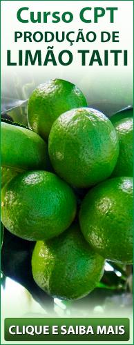 Curso CPT Produção de Limão Taiti. Clique aqui e conheça!