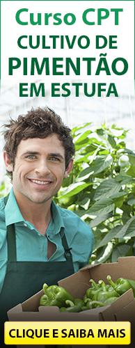 Curso CPT Cultivo de Pimentão em Estufa. Clique aqui e conheça!