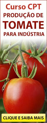 Curso CPT Produção de Tomate para Indústria. Clique aqui e conheça!