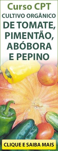 Curso CPT Cultivo Orgânico de Tomate, Pimentão, Abóbora e Pepino. Clique aqui e conheça!