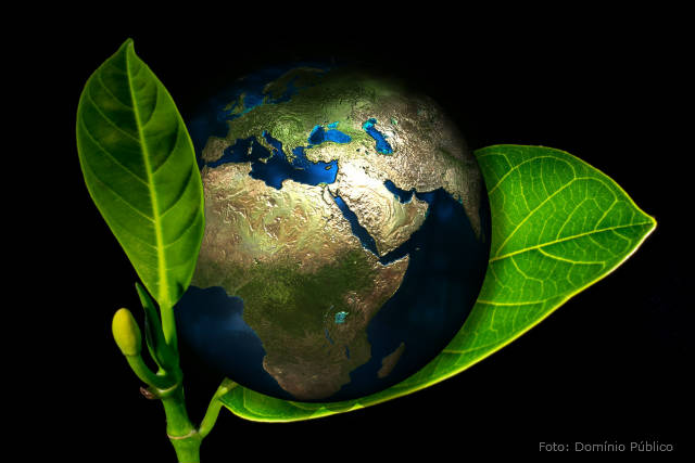 Conheça a agricultura revitalizadora de ecossistemas