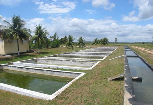 Como criar til pias tecnologia e treinamento for Cria de peces en estanques de cemento