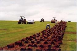 Cultivo de Gramas e Implantação de Gramados