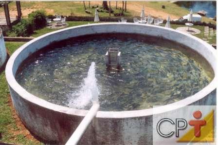 Constru o de tanques para peixes tecnologia e treinamento for Tanques para cria de tilapia