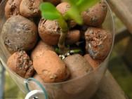 Sistemas Hidropônicos - cultivo em cascalho ou argila expandida