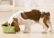 Aprenda Fácil Editora: Qual o melhor alimento para um cão?