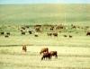Aprenda Fácil Editora: Tipos de gramíneas existentes em uma propriedade rural