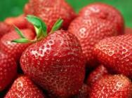 Aprenda Fácil Editora: Como cultivar morangos de forma orgânica?