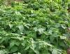 Aprenda Fácil Editora: Benefícios da irrigação na prática agrícola