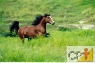 O comportamento dos cavalos