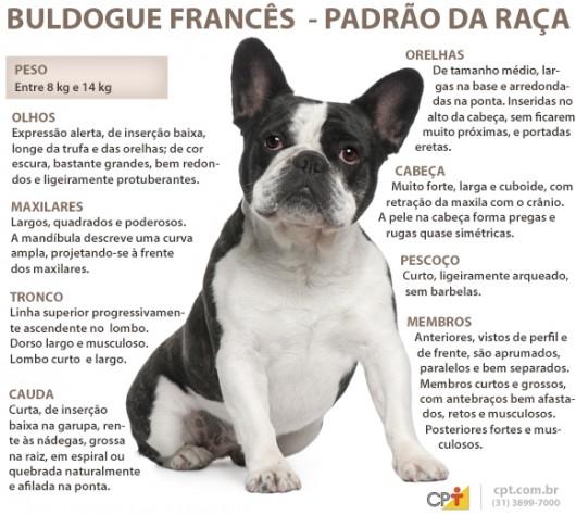 Padrao da raca Buldogue O Bulldog Baba Muito