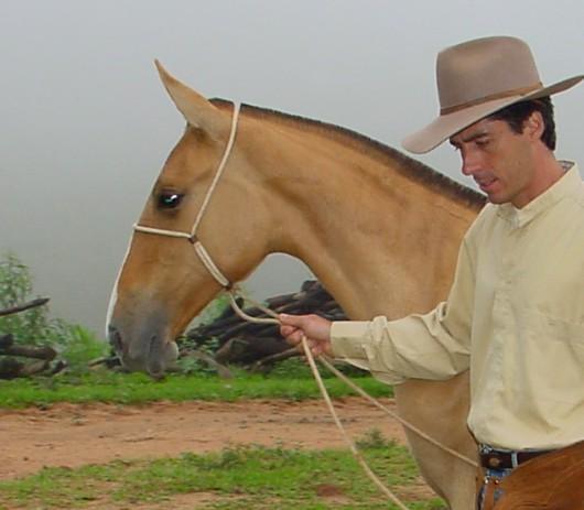 Doma natural de cavalos - 10 regras para realizar o cabresteamento no equídeo