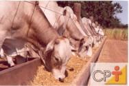 Características dos bovinos para confinamento