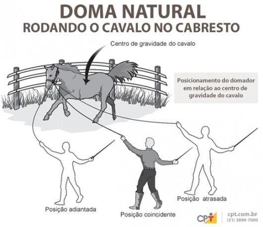 Doma natural de cavalos - rodando o equídeo no redondel com cabresto ou guia