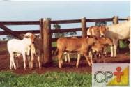 O bem-estar animal na cadeia produtiva bovina