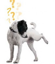 Aprenda Fácil Editora: A Castração em Cães