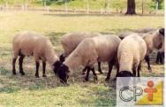Pastagens para ovinos