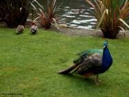 O investimento acessível é um dos principais motivadores para quem pretende iniciar uma criação de aves ornamentais
