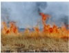 Aprenda Fácil Editora: Cuidados essenciais na prática de queimadas