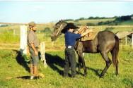 Doma natural de cavalos - 5 passos para encilhar o equino