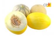 Tipos e variedades de melão
