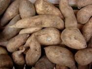 Horta - como plantar batata-doce (Ipomoea batatas) de forma org�nica