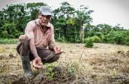 Café orgânico - o manejo do solo para a produção orgânica de café