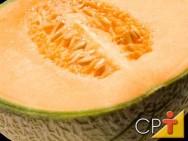 Época de plantio do melão