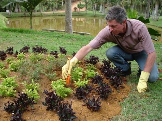 Conheça os principais tratos culturais dos jardins  Aprenda Fácil