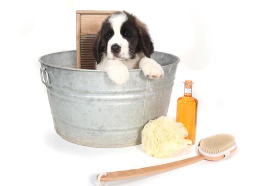 O ideal é que os cachorros tomem banho de 15 em 15 dias