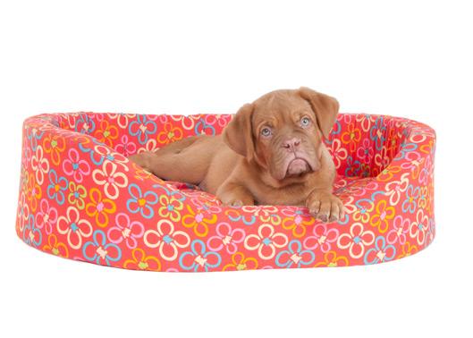 Se o cachorro for ficar dentro de casa providencie caminhas e almofadas confortáveis