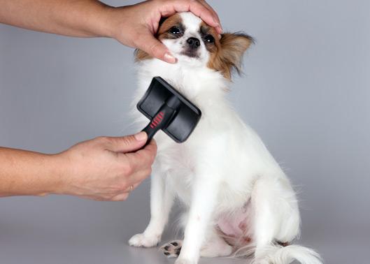 Os cães adoram ser escovados, torne este momento um hábito