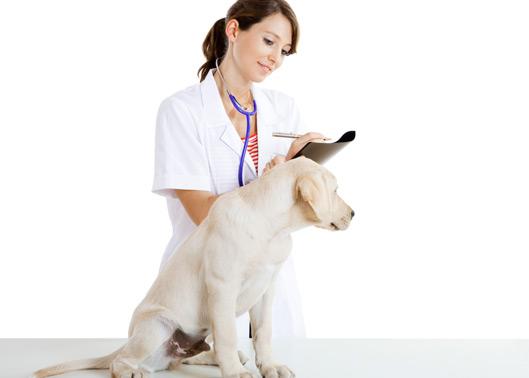 Leve seu cão ao veterinário periodicamente