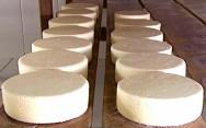 Como produzir Queijo do Serro: coagula��o, corte, retirada do soro, enformagem, salga e cura