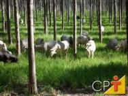 A Integração Lavoura-Pecuária-Floresta permite produzir pasto, forragem conservada e grãos para alimentação animal.