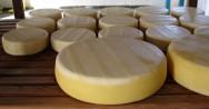 Como produzir Queijo Canastra: coagula��o, corte, retirada do soro, enformagem, salga e cura