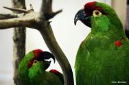 Taxidermia - equipamentos e produtos qu�micos para o empalhamento de aves e mam�feros