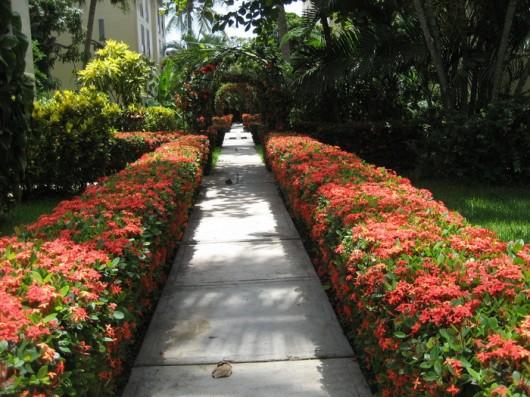 flores no jardim letra:Os arbustos, principalmente os floridos, renovam o seu jardim, dão