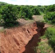 Caf� org�nico - cuidados essenciais para a conserva��o do solo e controlar a eros�o