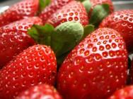 Produ��o de morango -  vi�vel investimento para o aumento da  renda do produtor rural