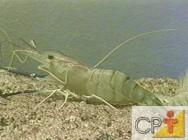 Para o sucesso da criação de camarões de água doce, é fundamental que o viveiro seja construído de maneira adequada.