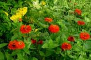 Cuidados durante a colheita e p�s-colheita das plantas medicinais