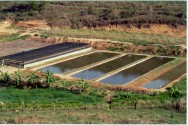 Como os piscicultores podem vencer a seca sem diminuir a produtividade