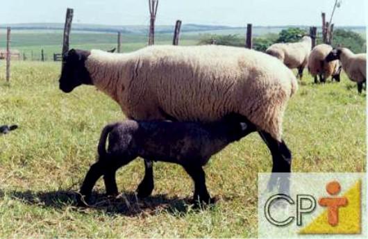 CPT supuesto la cría de ovejas