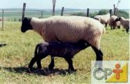 Técnicas de cruzamento em ovinos