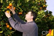 Fruticultura irrigada permite obter frutos de qualidade em todas as regi�es e na entressafra